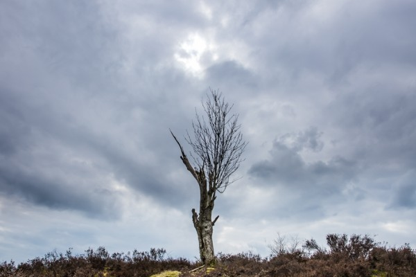 balloerveld-eddy-reynecke-photography-7-van-8