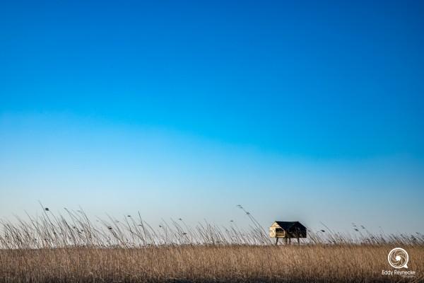 vogelhut-nieuw-statenzijl-eddy-reynecke-photography-1-van-16