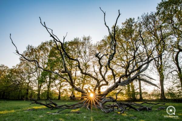 zonsondergang-boom-orvelte-eddy-reynecke-photography-1-van-3