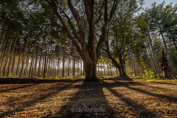 zonsopkomst-bakkeveen-eddy-reynecke-photography-2-van-8
