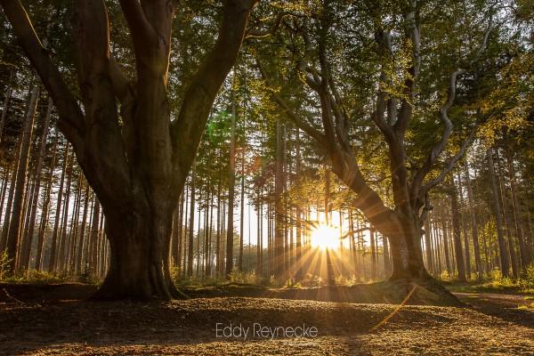 zonsopkomst-bakkeveen-eddy-reynecke-photography-3-van-8