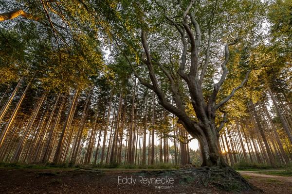 zonsopkomst-bakkeveen-eddy-reynecke-photography-8-van-8
