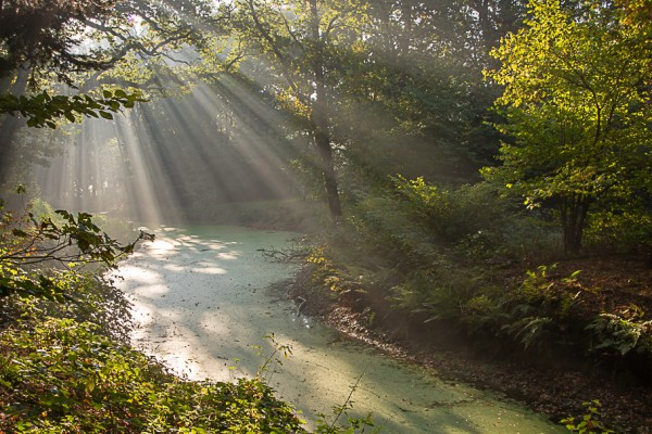 zonsopkomst-slochterbos-eddy-reynecke-photography-17-van-22