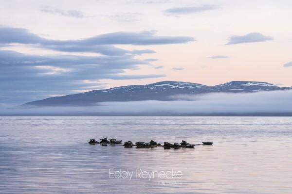 ijsland-2018-eddy-reynecke-photography-4-van-15
